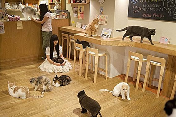 Cat Café  Concepts take Japan by Storm