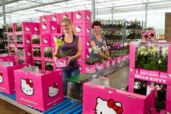'Hello Kitty' plants arrive at stores to impress young girls and woman