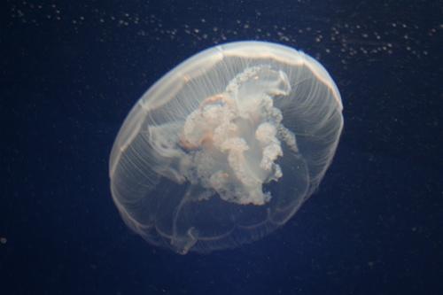 Pet Jellyfish Desktop Tank