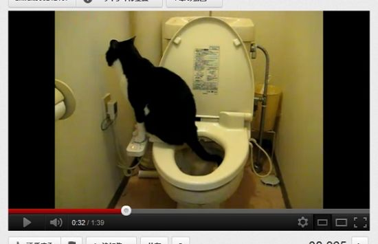 Japanese cat uses a bidet in the toilet with the paw