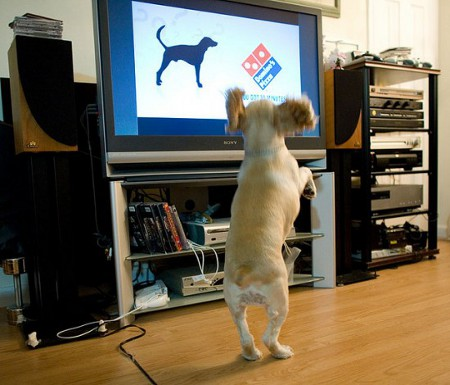 DOGTV is an exclusive channel for your doodle