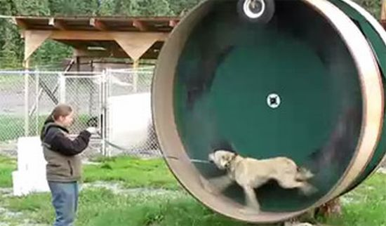 Dog Walk Out barrel a treat for your pet