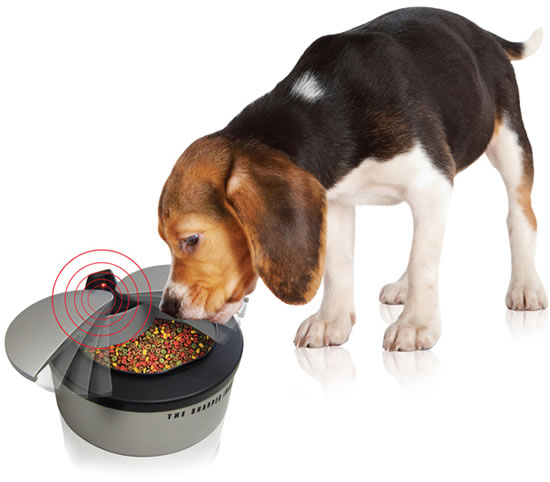 Motion Activated Pet Bowl feeds your pet in style