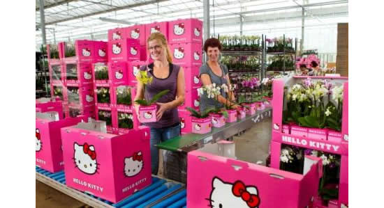 Hello Kitty plants and flowers for Mother's Day