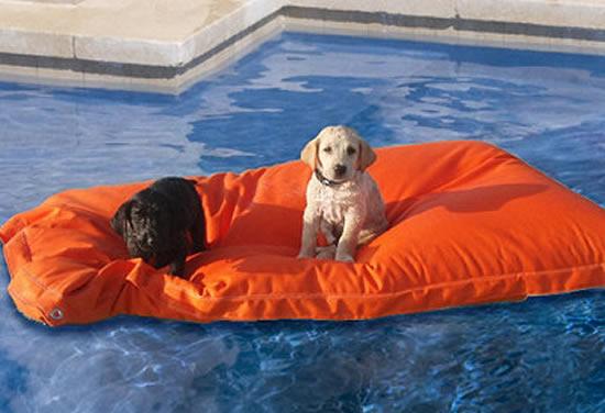 The Pet Kai Pool Float: A lazy dog's lifesaver