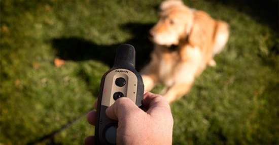 Garmin Launches Electronic Dog Training Collars