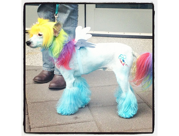 This dog dressed up as Rainbow Dash is adorable