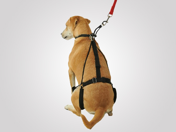 Canine's Tug Preventing Harness is Gentle on Dogs