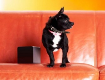 Petcube Laser Pointer, A Friend-in-disguise for Lonely Pets