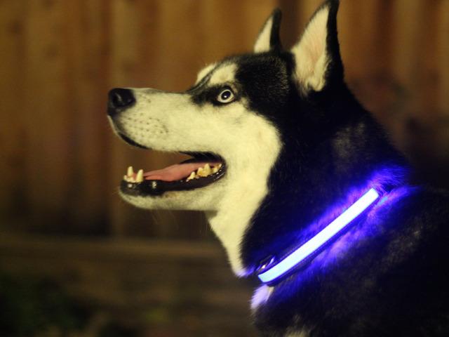 HALO MINI – Illuminated Pet Collars