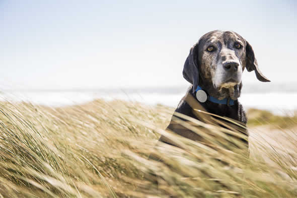 Whistle Smart Collar is a Fitness Device for Dogs