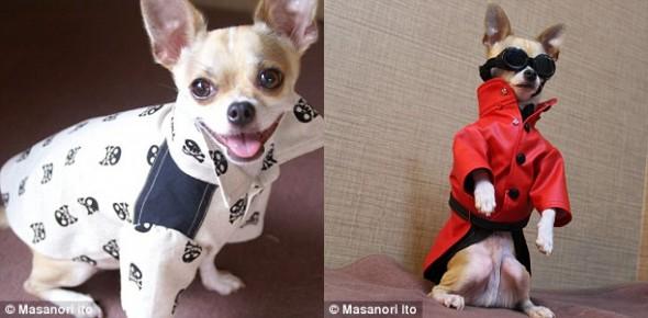 Встречайте Монтджиро: самого модного пса в мире!