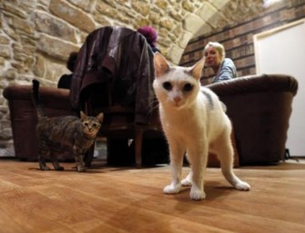 Café des Chats, first Cat Café opens in Paris