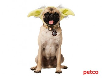 Star Wars and Petco join forces for pet accessories