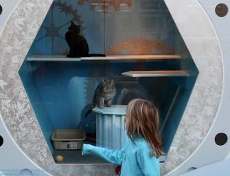 Macy's Holiday Display houses Adorable, Adoptable Pets