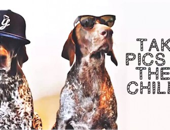 How To Make Your Dog An Instagram Star: An instructional video