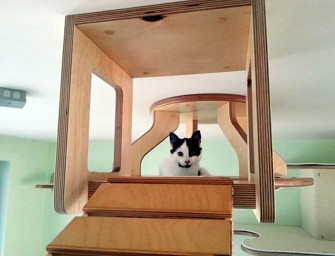 Cat Perches, Traverse Bridges and More for your Cats