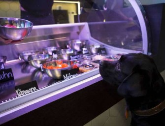 Pets Deli brings Gourmet Food for your Furry Friends