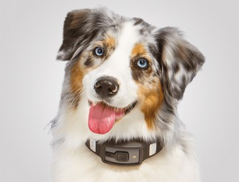 Care for Dogs like Never Before, get them Voyce Techie Bands