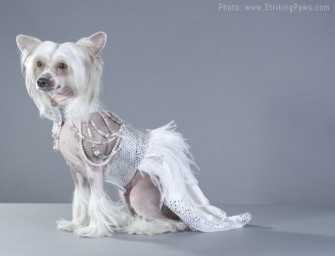The Futuristic Royal Dress by Mario Laliberté: For your doggie bride-to-be