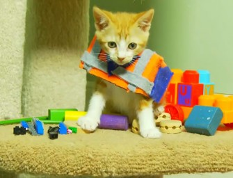 The LEGO Movie remade with kitten goodness