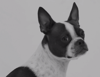 Puppy Love at Its Best with 'First Sniff' Parody