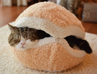 The Burger Cat Bedkeeps your kitty warm on cold winter days