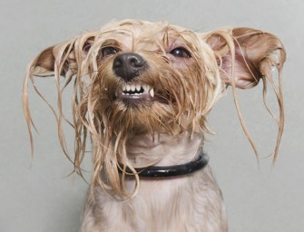 "The Wet Dog series perfectly captures the misery of ""bath time"""