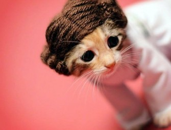 Photographer Dresses Up Kittens as Movie Characters