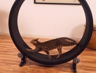 The One Fast Cat Exercise Wheel for cats makes over $250,000 on Kickstarter