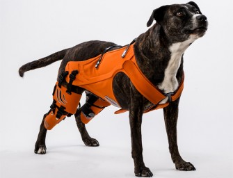 The Hipster Harness by Galia Weiss helps dogs with Hip Dysplasia walk with ease