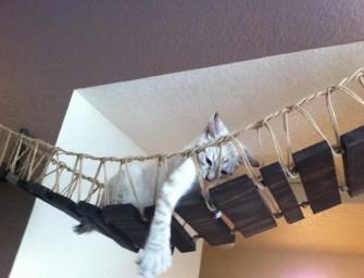 The Indiana Jones Cat Bridge guarantees hours of adventure for kitty