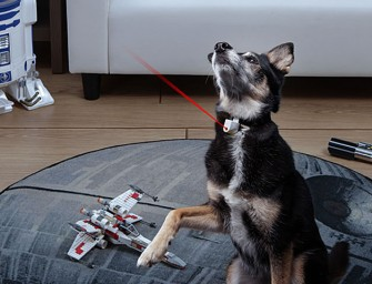 Laser Collar Pet Toy: The game that can never ever be won