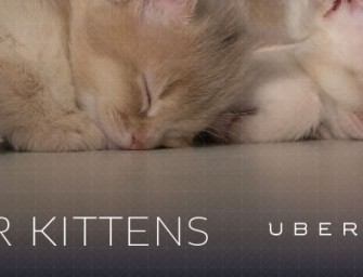 Uber Will Now Deliver Kittens To Your Office For One Very Special Day