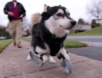 Derby's 3D Printed Prosthetic Limbs: Watch him sprint for the first time