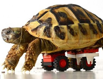 An innovative LEGO Wheelchair for a disabled Tortoise!