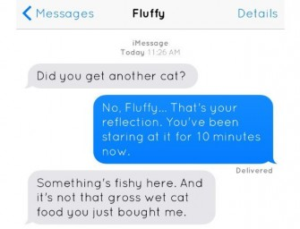 What if cats could text? Hilarious writers put into words your cat's messages to you