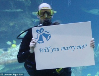 Get your Dream Proposal with London Aquarium's Proposal Package