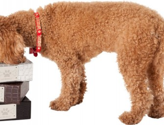 LazyBonezz launches new Luxury Feeding Bowls: For the dog with discerning taste