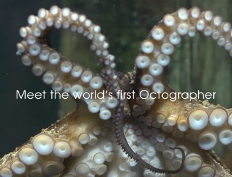 Sony Promotes Water-resistant Camera with help From an Octopus