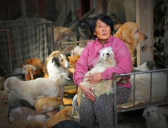 Amazing Chinese woman buys 100 dogs to save them from inhumane torture at the Yulin dog-meat festival